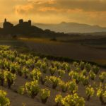 January 24th • Wines of Italy • Wine Tasting Wednesday